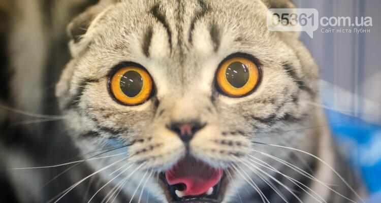 16 обов'язків кожного кота. Перевірте, чи ваш кіт все робить правильно, фото-1