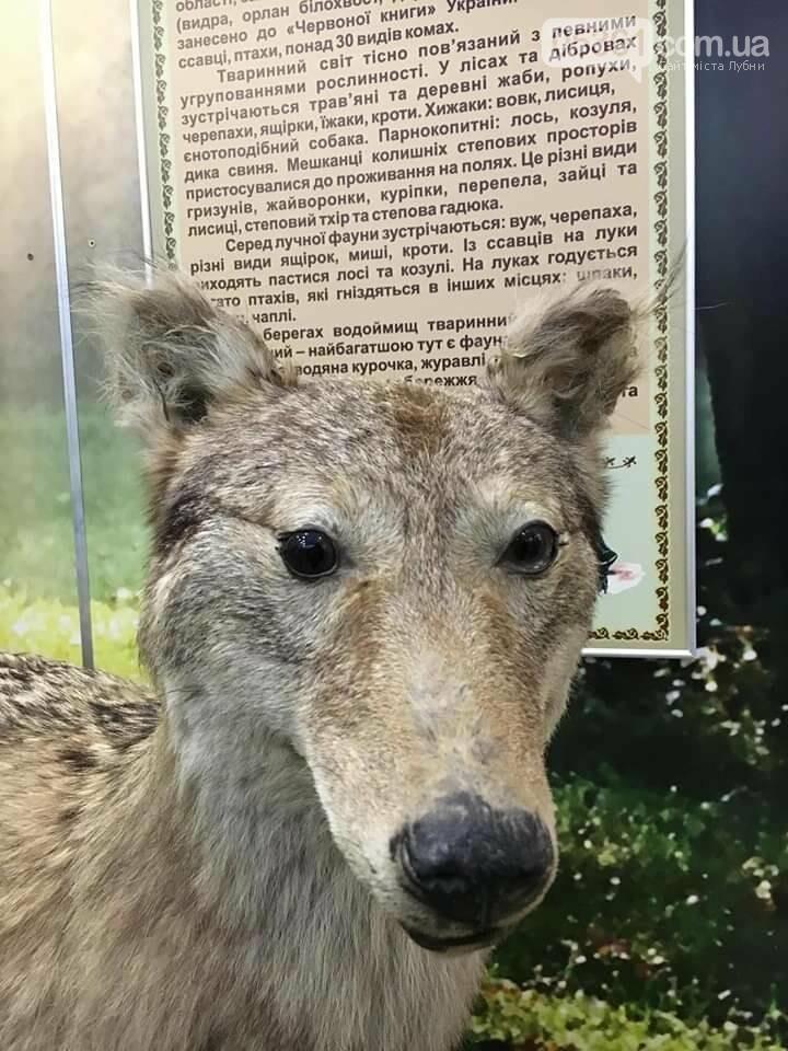 Лубенський вовк засумував, фото-1