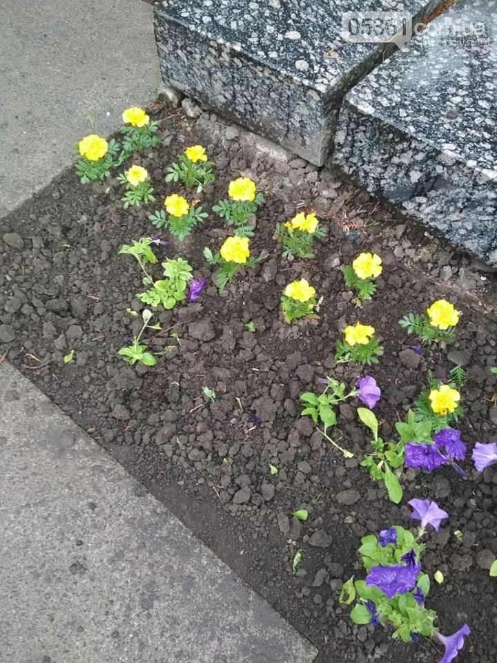 У Лубнах з центральної алеї викрали висаджені квіти, фото-2