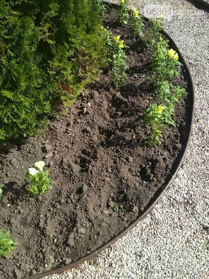 У Лубнах з центральної алеї викрали висаджені квіти, фото-3